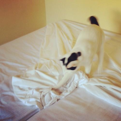 ponyo fa il letto